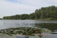 Lago en Lituania, año 2013 Fotos de archivo libres de regalías