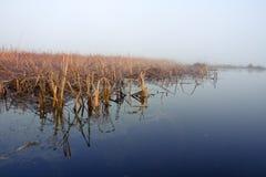 Lago en niebla imagenes de archivo