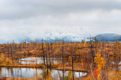 Lago en tundra en la península de Taimyr Fotos de archivo