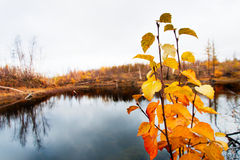 Lago en tundra en la península de Taimyr Fotos de archivo libres de regalías