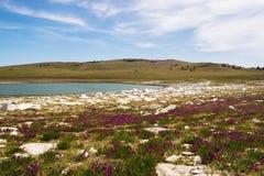 Lago lago en un campo con las flores en la orilla lagos en un día claro imágenes de archivo libres de regalías