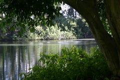 Lago en una tarde del verano Fotos de archivo libres de regalías