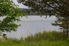 Lago en verano Fotos de archivo libres de regalías