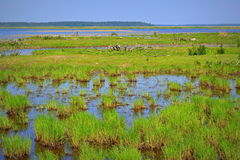 Lago Engure Imagem de Stock Royalty Free