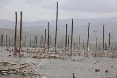 Lago Enriquillo, barco foto de stock royalty free