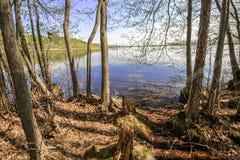 Lago ensolarado bonito do céu azul da floresta brilhante mágica do sol da mola Fotografia de Stock Royalty Free