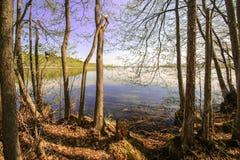 Lago ensolarado bonito do céu azul da floresta brilhante mágica do sol da mola Fotos de Stock