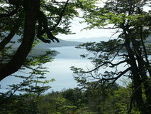 Lago escondido Abflussrinne der Baum Lizenzfreie Stockfotos