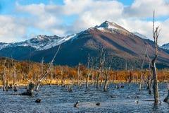 Lago Escondido, Isla Grande de Tierra del Fuego, la Argentina Fotografía de archivo