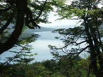 Lago escondido trough the tree Royalty Free Stock Photos