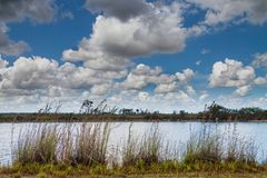 Lago everglades Immagine Stock