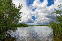 Lago everglades Foto de archivo libre de regalías