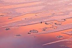Lago fish del invierno en la salida del sol Fotos de archivo