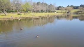 Lago - fiume - stagno fotografie stock libere da diritti