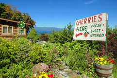 Lago Flathead Cherry Stand Foto de Stock