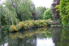 Lago - floresta fotografia de stock royalty free