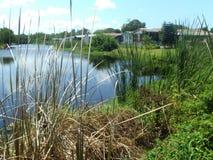 Lago florida fotos de archivo libres de regalías