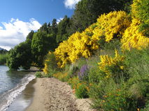 Lago flower fotos de archivo