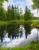 Lago forest imagen de archivo