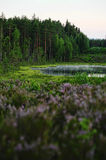 Lago forest imagens de stock royalty free