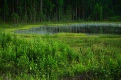 Lago forest fotografia de stock