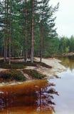 Lago forest Foto de archivo libre de regalías