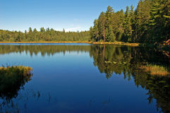 Lago forest Imagens de Stock