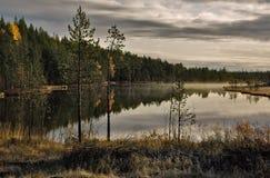 Lago forest Fotos de archivo libres de regalías