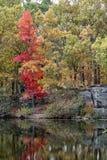 Lago forest in autunno Immagini Stock