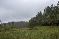 Lago forest in Carelia Immagine Stock