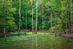 Lago forest com água ereta Imagens de Stock