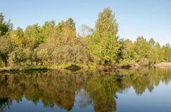 Lago forest con la riflessione degli alberi e del cielo Immagini Stock