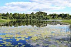 Lago forest con los lirios de agua Fotografía de archivo