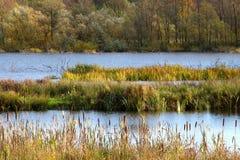 Lago forest em cores do outono imagens de stock royalty free