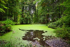 Lago forest em Moravia, república checa Foto de Stock Royalty Free