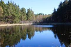 Lago forest em um dia de ver?o ensolarado Tempo calmo calmo imagens de stock