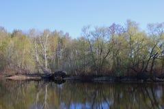 Lago forest em um dia de ver?o Tempo calmo calmo fotos de stock