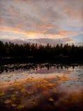 Lago forest en la oscuridad Fotos de archivo