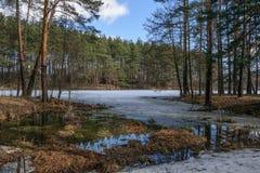 Lago forest en la primavera en un día soleado Imagen de archivo