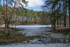 Lago forest en la primavera en un día soleado Foto de archivo