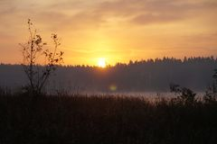 Lago forest en puesta del sol Verano foto de archivo