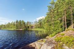 Lago forest en verano Foto de archivo