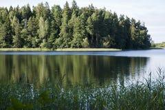 Lago forest, juncos, reflexões da água Foto de Stock