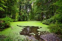 Lago forest in Moravia, repubblica Ceca Fotografia Stock Libera da Diritti