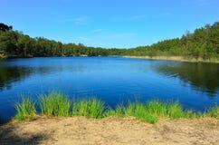 Lago forest nella luce del giorno Immagini Stock