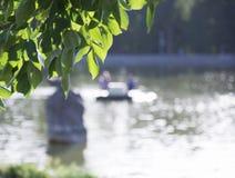 Lago forest no quadro das árvores Imagens de Stock