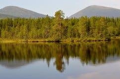 Lago forest no verão foto de stock