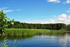 Lago in foresta Fotografie Stock Libere da Diritti