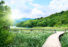 Lago in foresta fotografie stock