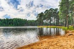 Lago in foresta Fotografia Stock